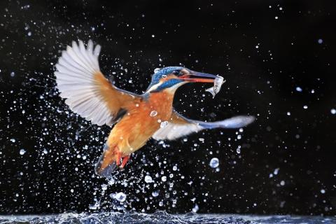 Canon Academy - Natur Tier und Makro