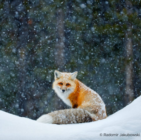 Zeige uns deine Winterfarben